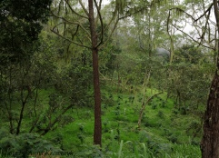 The forest of Mt. Agung, Bali.