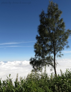 View over the clouds surrounding Mt. Agung.