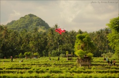 Kite over the rice fields in Candidasa.