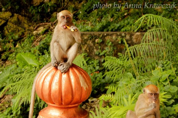 Monkeys on the way to Batu Caves