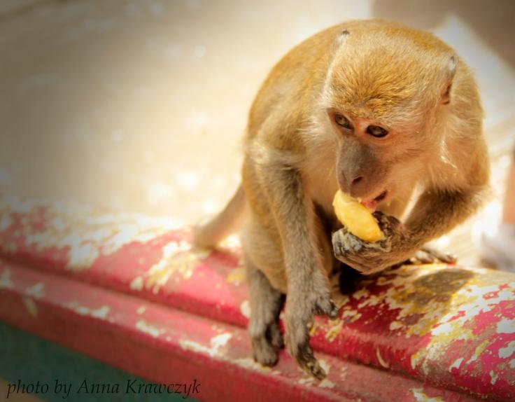 Little theft enjoying a piece of mango.