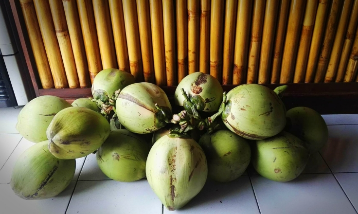 Young coconuts.